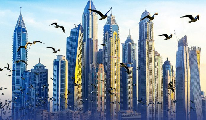 Hundreds Of Birds Strike On The New York City's High-rise Buildings